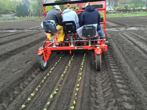 3 row Baby Compact in Mass. planting turnips