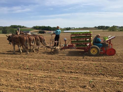 Amish using UniTrium