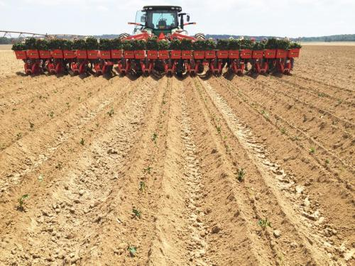 Edmondson 12 Row Foxdrive planting sweet