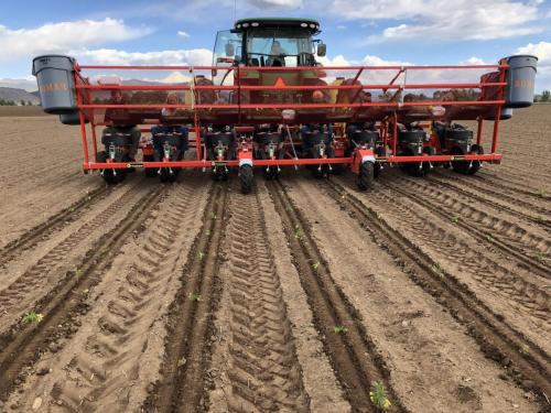 HEMP transplanting with C&M (Checchi & Magli) transplanter