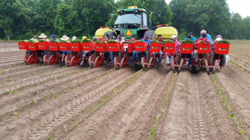 Foxdrive-8-row planting sweet potatoes