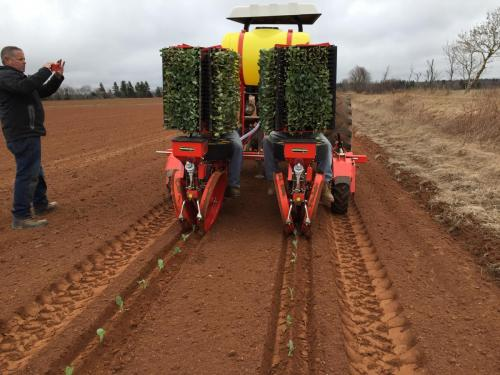 Trium 2-row planting turnips in New England
