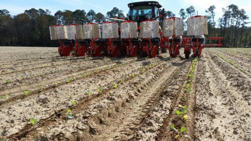 Trium-8-row planting cabbage