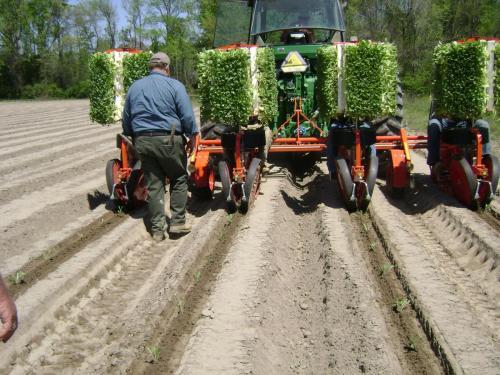Trium-4-row planting tobacco